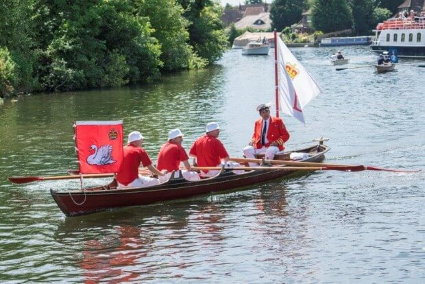 Swan Upping on the Thames 2017